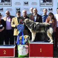 Suprem Best in Show-BISTRITZER BURG DOG SHOW 01-02.04.2017