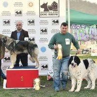 CAC1- BISTRITZER BURG DOG SHOW 01.04.2017