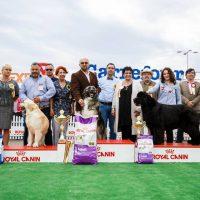 CAC1- BUCOVINA DOG SHOW – 20.05.2017- Suceava Shopping City