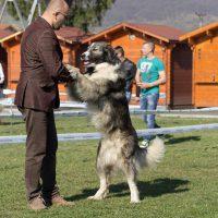 CACIB- BISTRITZER BURG DOG SHOW 02.04.2017