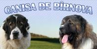Canisa de Birnova