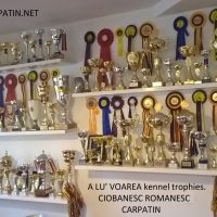 A LU' VOAREA kennel -Dog Show Results in 2017/ Rezultate expozitionale 2017- canisa A LU' VOAREA